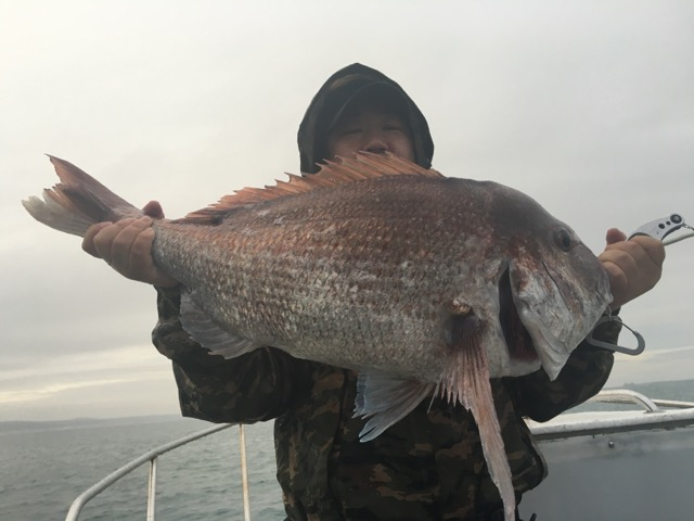 真鯛8.4kg